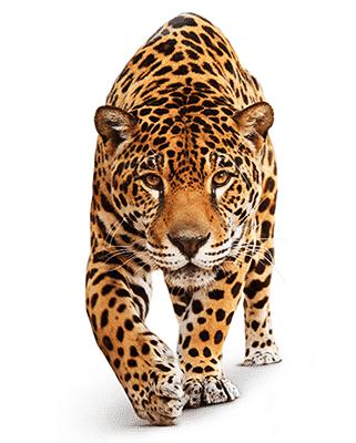 leopard-400h